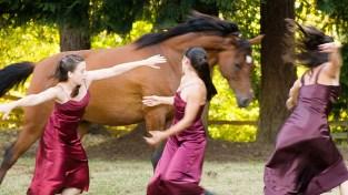 Equus Project