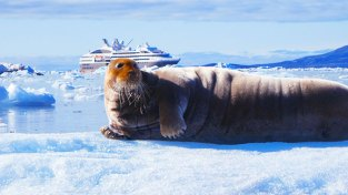 Arctic shot of seal and boat