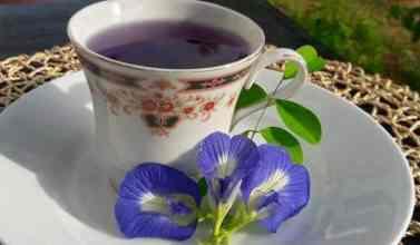 clitoria ternatea tea