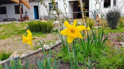 El jardin de la charca 23