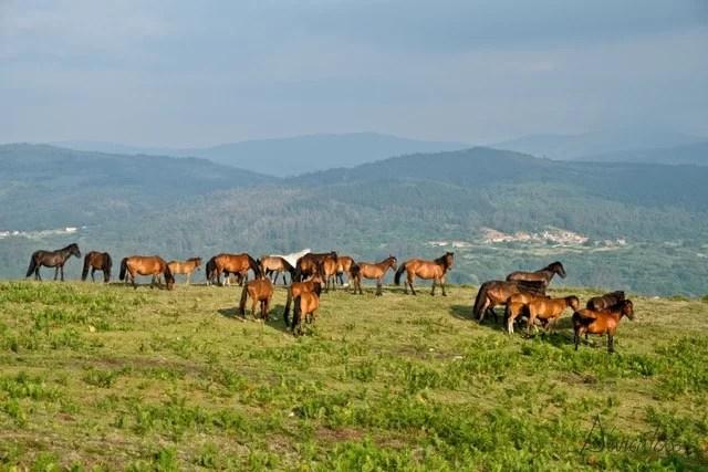 caballos y Rapa das Bestas de Sabucedo
