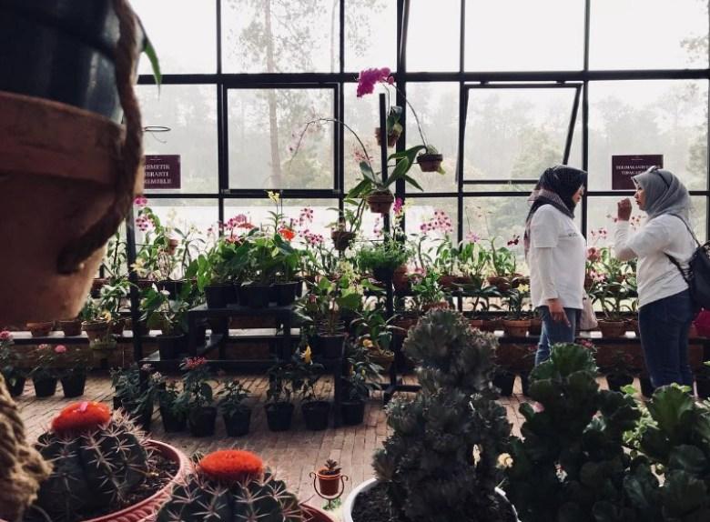 Pusat Jualan Anggrek Khas Orchid Forest Cikole Lembang
