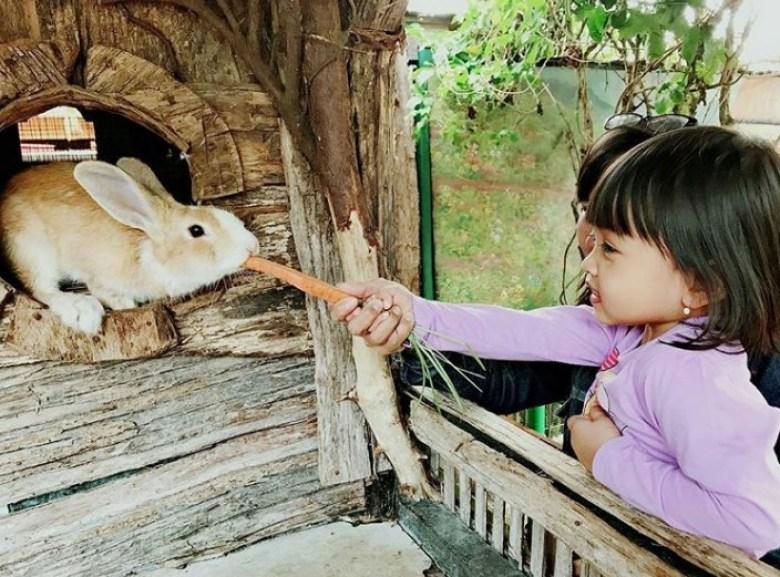 Memberi Makan Kelinci di Mini Zoo Farmhouse Lembang Bandung