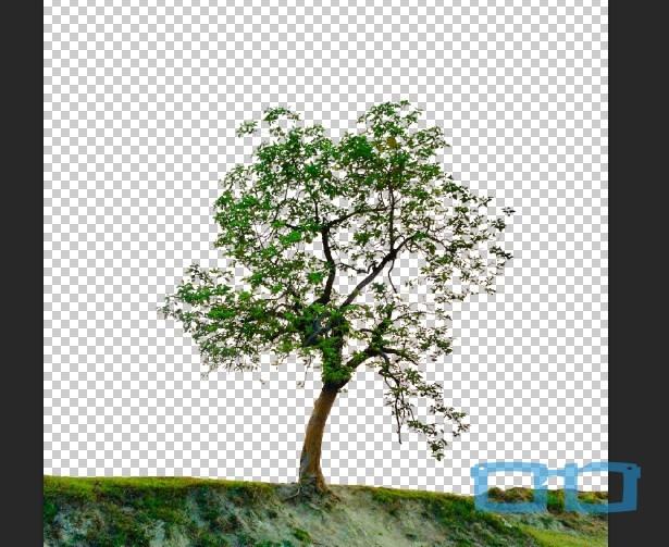 Hasil Seleksi Pohon di Photoshop