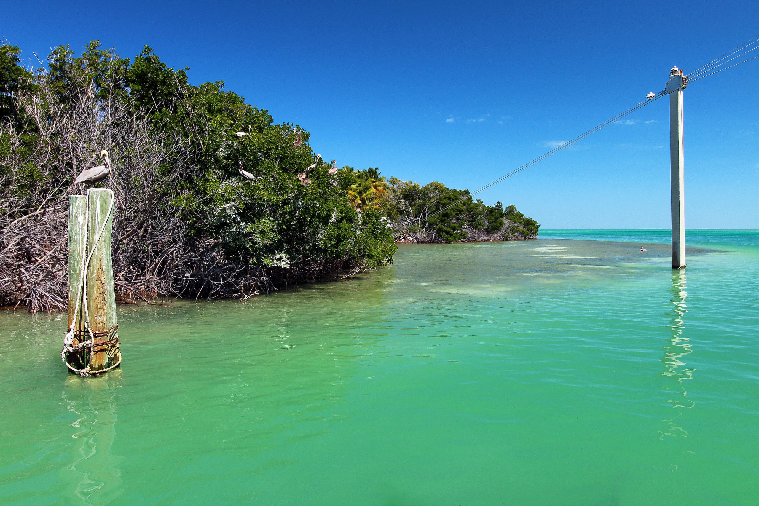The Best Things To Do In Islamorada