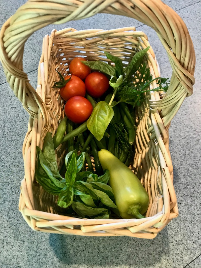 A bushel basket filled with freshly picked cherry tomatoes, green beans, banana peppers, and basil leaves.