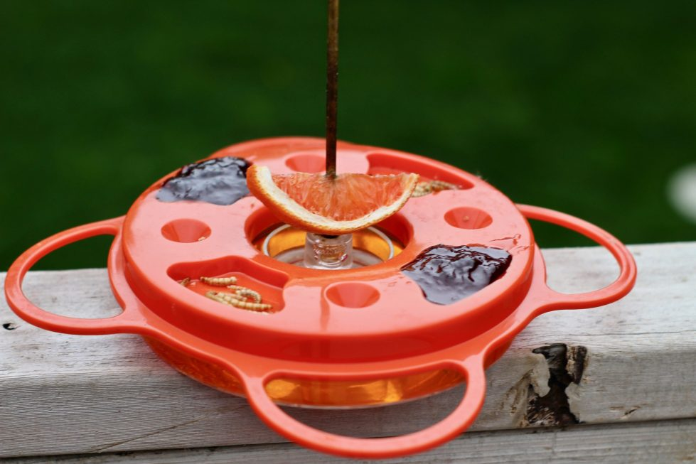 An orange Oriole feeder filled with orange nectar, with jelly and dehydrated mealworms resting on the lid, with an orange wedge skewered onto the hanger.