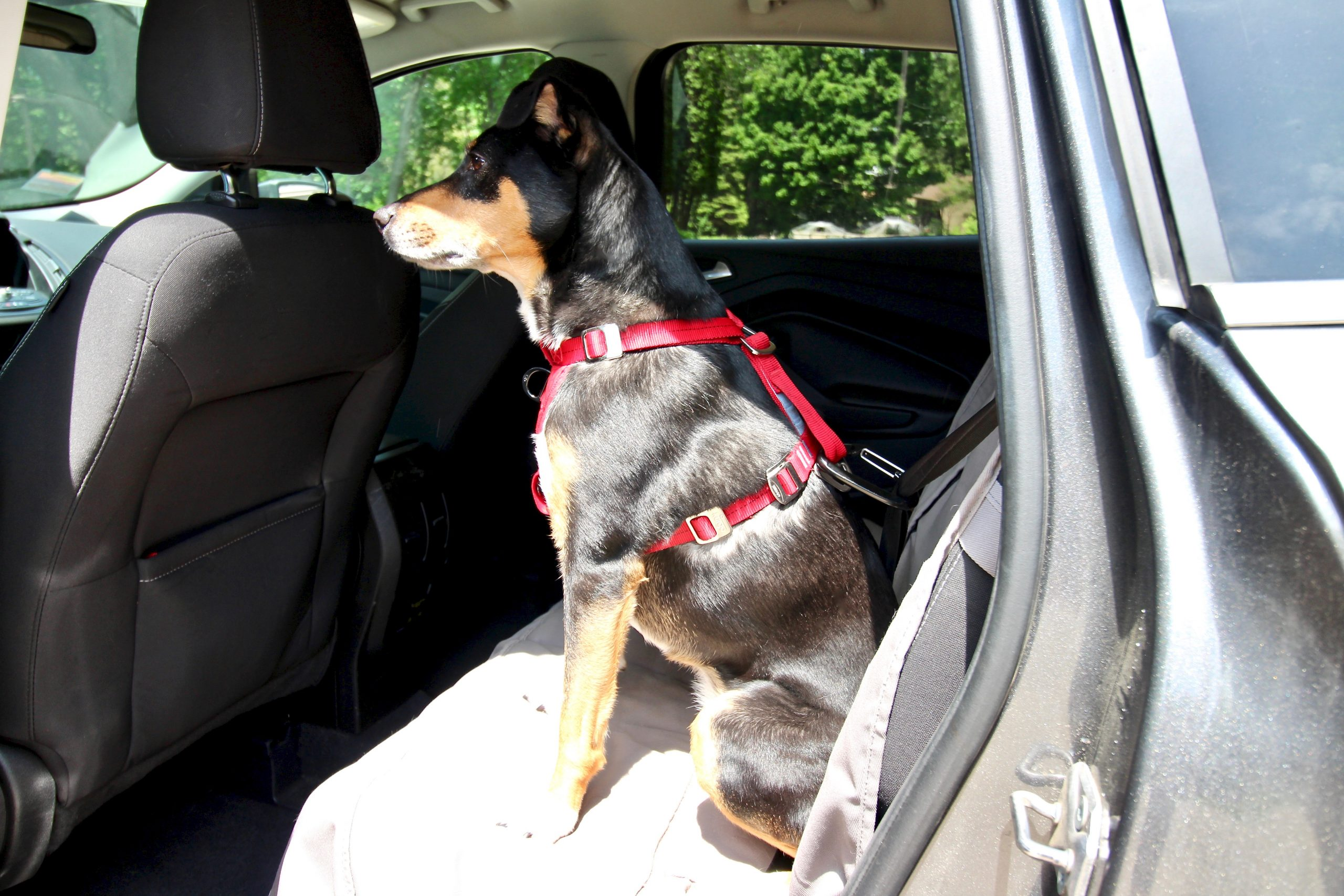 How To Keep Your Dog Safe And Secure In The Car