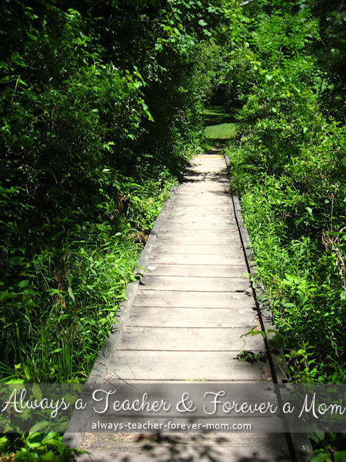 Walking through a boggy area has its risks. These wooden paths are great for crossing without harm.