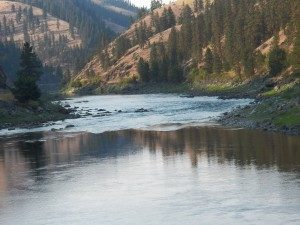 Looking down the Clearwater River in Idaho at a great steelhead run. -A few years ago on a colorful late fall afternoon on the Clearwater River in Idaho I had a choice presented me that I think that we are all faced with at one time or another as anglers. I was swinging a spot that I had caught a steelhead a few days earlier. It is a very short run with a swirl of water about twenty feet from shore that indicates the presence of a midstream rock. This rock had been very, very good to me over the last 20 years. This was as much of a guaranteed spot for me on the Clearwater as anywhere on the notoriously fickle river.