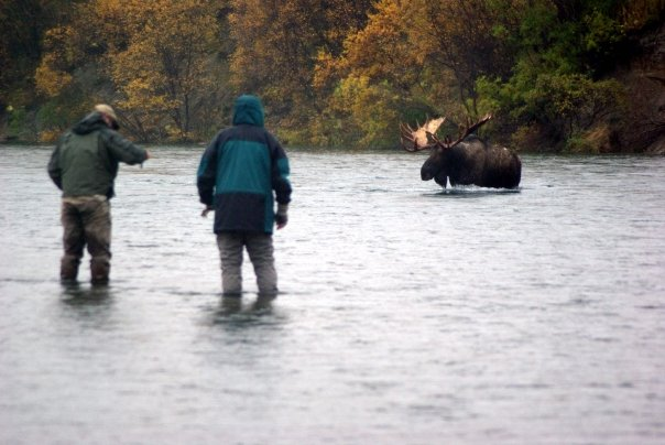 Two Alaskan fly fishermen looking at a large bull moose - Fly fishing is the joyful enigma of all outdoor pursuits. There are so many esoteric nuances, large and small, that anglers must master to be happy and successful in their piscatorial pursuits. Fly selection, casting and selecting the proper fly rod, reel and fly line combination are the obvious skills that most fly fishermen become somewhat adept at after a few years. However there is one, often overlooked fishing proficiency that will determine whether a fisherman is going to have a bad or good day on the water.