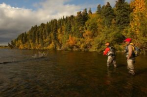 Fall in Alaska brings colors and large trout. A guide is helping a client catch one