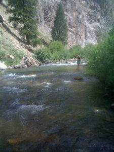 A man fly fishing a mountain stream in Idaho using a a Galvan Brookie reel