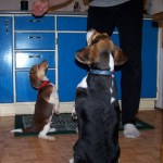 Sheba teaching Cocoa tricks