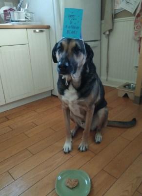 Bear's 6th Birthday