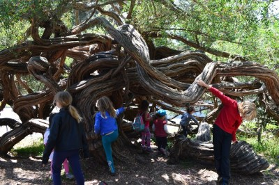 treecamp