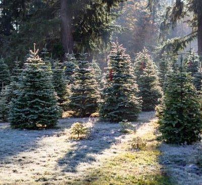 Christmas Tree Farm Scavenger Hunt Free Printable