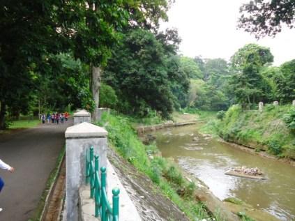 Bogor Botanical Gardens Kebun Raya20