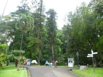 Bogor Botanical Gardens Kebun Raya22