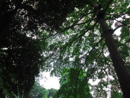 Bogor Botanical Gardens Kebun Raya24