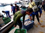 fish haul