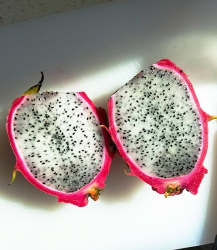 Dragon Fruit: HKTS1. Photo Credit: I'mari Avey. INTJ May Challenge. Alwaysuttori.com
