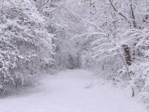 Dünyadaki insanların üçte ikisi hiç kar görmedi.