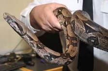 Bir yılan 3 yıl uyuyabilir..