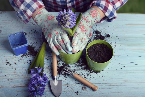 Plant Your Own Garden To Decorate Your Soul
