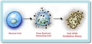nrf2 diabetes cellular stress