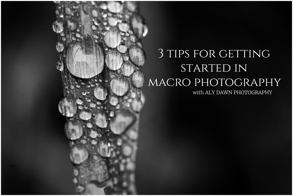 3 Tips to Get Started in Macro Photography