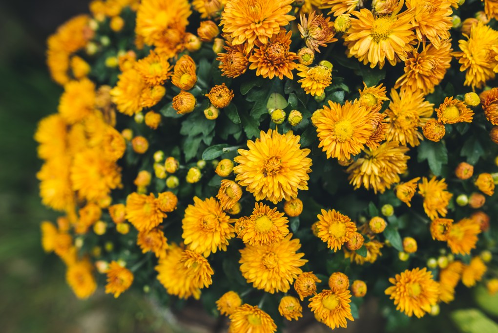 Aly Dawn Photography - Yellow Flowers