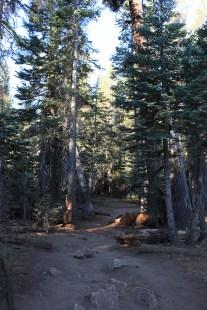 S.P - Dark Trail