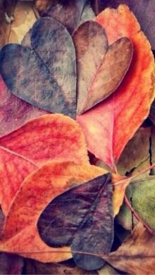 Leaves Full of Love