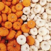 Orange & White Love