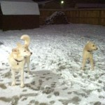 My dogs playing in the snow!