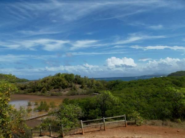 Mangrove, Presqu'ile de la Caravelle - Martinique