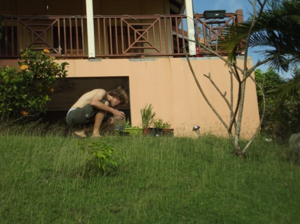 Gardening in Martinique