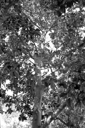 Leica M2 Fuji Neopan Acros II 100