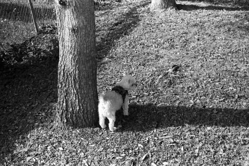 Leica M2 Eastman Kodak XX 200