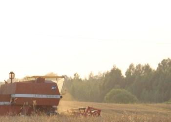 Javų derlius Alytaus rajone gali būti prastas arba jo iš viso gali nebūti
