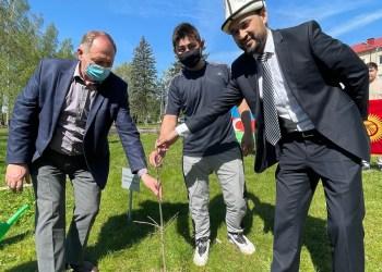 Studentų iš Kirgizijos dovanotą ąžuolą prie Alytaus kolegijos sodina jos direktorius Sigitas Naruševičius