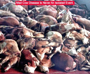 mad cow disease UK