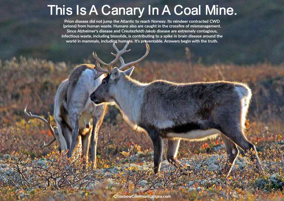 chronic wasting disease a prion disease