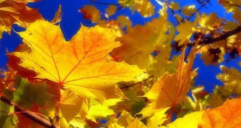 Золотой сентябрь по всему миру