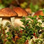 Грибы в лесу — властелины планеты