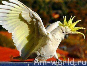 Попугай поет, танцует и... шпионит