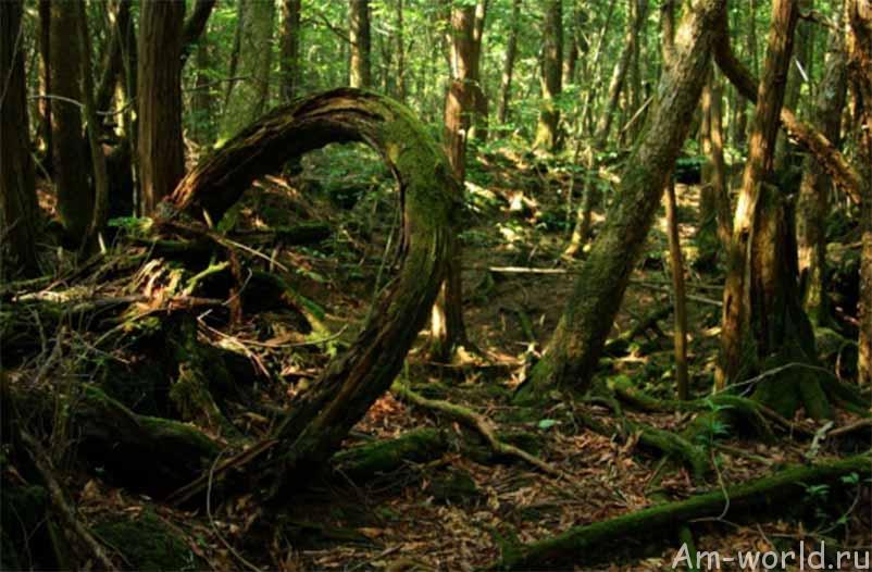 Лес Аокигахары — излюбленное место самоубийц