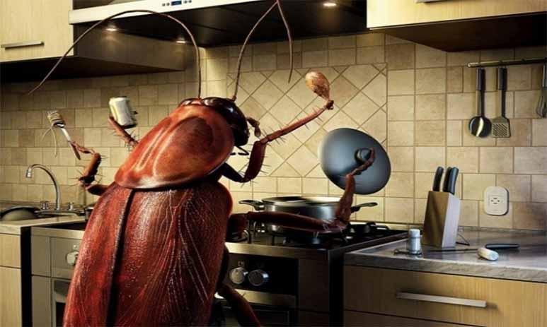 И как теперь без тараканов?