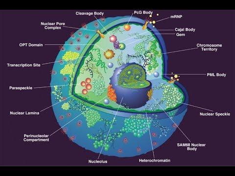 Гипотеза полой Земли: Кто живёт в недрах?